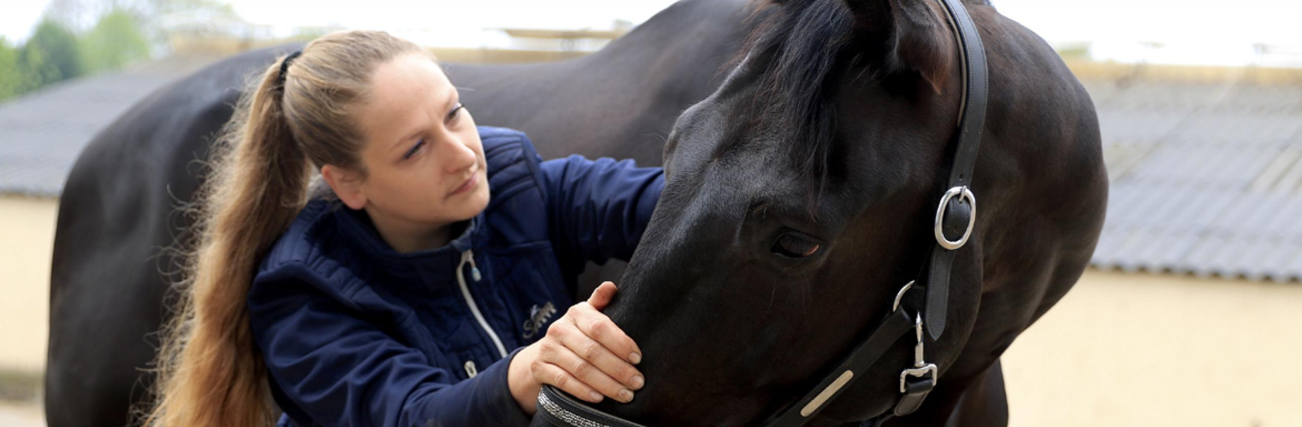 Paardenmassage Harrop